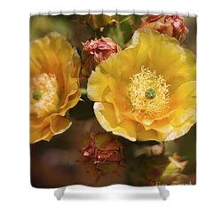 'albispina' Cactus #2 Shower Curtain