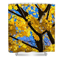 Alchemy Of Nature - Refining The Sungold Shower Curtain by Alexander Senin