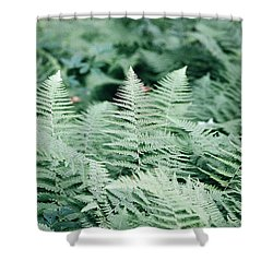 Shower Curtain featuring the photograph Algonquin Ferns by David Porteus