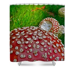 Alice's Shrooms Shower Curtain