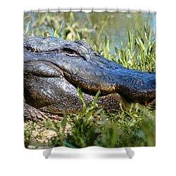 Alligator Smiling Shower Curtain