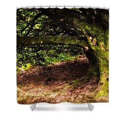 Alive Memory Of Thetrees. Glendalough. Ireland Shower Curtain by Jenny Rainbow
