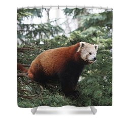All Alone Shower Curtain by Judy Whitton