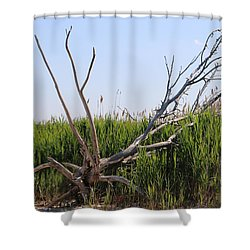 Shower Curtain featuring the photograph All Alone by Paul SEQUENCE Ferguson             sequence dot net