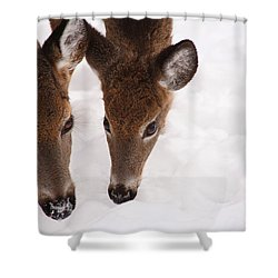 All Eyes On Me Shower Curtain by Karol Livote