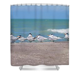 All In A Row Shower Curtain by Kim Hojnacki
