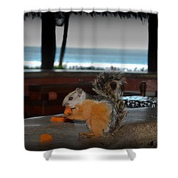 All Inclusive Squirrel Shower Curtain by Gary Keesler