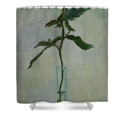 All My Love Shower Curtain by Margaret Norris