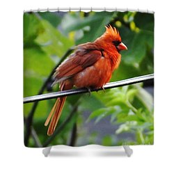 Shower Curtain featuring the photograph All Puffed Up And Nowhere To Go by Lizi Beard-Ward
