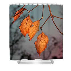 All That's Left Shower Curtain by Dolores  Deal