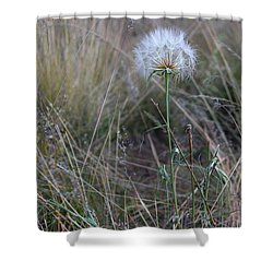 Shower Curtain featuring the photograph All The Small Things by Ruth Jolly