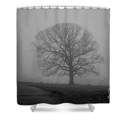 Shower Curtain featuring the photograph All Trees Are Nice by Carlee Ojeda