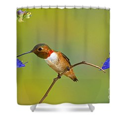 Allens Hummingbird Shower Curtain by Anthony Mercieca