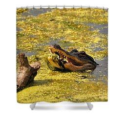 Alligator Ambush Shower Curtain by Al Powell Photography USA