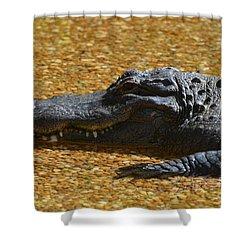 Alligator Shower Curtain by DejaVu Designs