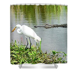 Alligator Egret And Shrimp Shower Curtain by Al Powell Photography USA