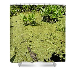 Alligator In Corkscrew Swamp, Florida Shower Curtain by Gregory G. Dimijian