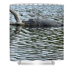 Shower Curtain featuring the photograph Alligator Resting On A Log by Ron Davidson