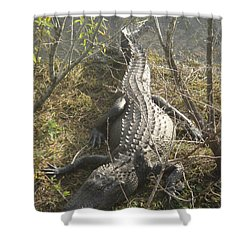 Shower Curtain featuring the photograph Alligator by Robert Nickologianis
