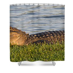 Alligator Smile Shower Curtain