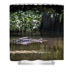 Alligator Swimming In Bayou 2 Shower Curtain