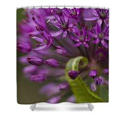 Allium Curl Shower Curtain by Anne Gilbert