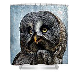Allocco Della Lapponia - Tawny Owl Of Lapland Shower Curtain