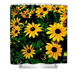 Sunflower Allure Shower Curtain