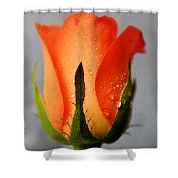 Allure Shower Curtain by Felicia Tica