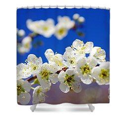 Almond Blossom Shower Curtain by Carlos Caetano