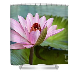 Almost In Full Bloom Shower Curtain by Sabrina L Ryan