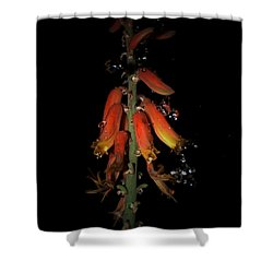 Shower Curtain featuring the photograph Aloe Flower by Leticia Latocki