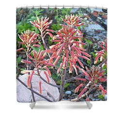 Aloe In Bloom Shower Curtain by Belinda Lee