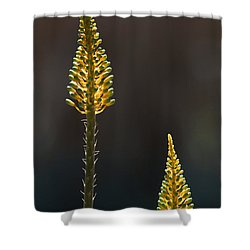 Aloe Plant Shower Curtain by Tam Ryan