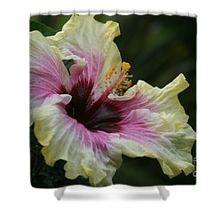 Aloha Aloalo Tropical Hibiscus Haiku Maui Hawaii Shower Curtain by Sharon Mau