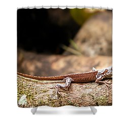 Aloha Anole   Shower Curtain