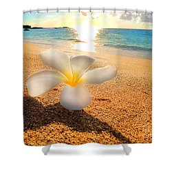 Shower Curtain featuring the photograph Aloha Paradise by Kristine Merc