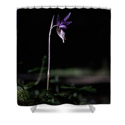 Shower Curtain featuring the photograph Alone In The Forest by Betty Depee
