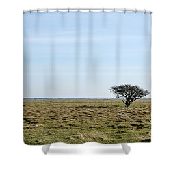 Alone Tree At A Coastal Grassland Shower Curtain