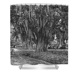 Along The River Road Near Vacherie La Shower Curtain by Kathleen K Parker