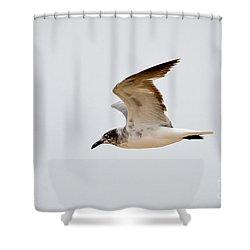 Alongside - Seagull Shower Curtain