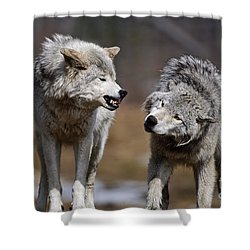 Shower Curtain featuring the photograph Alpha Displeasure by Wolves Only