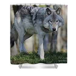Alpha... Shower Curtain by Nina Stavlund