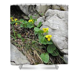 Shower Curtain featuring the photograph Alpine Beauty 1 by Pema Hou