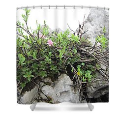 Shower Curtain featuring the photograph Alpine Beauty by Pema Hou