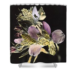 Alstroemeria Shower Curtain by Lana Enderle