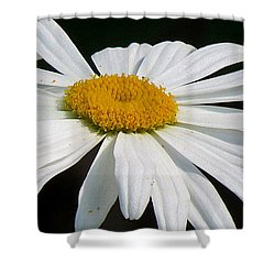 Shower Curtain featuring the photograph Always by France Laliberte
