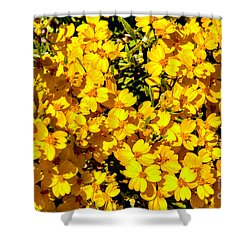 Am I Dreaming About Buttercups Shower Curtain by Bob and Nadine Johnston