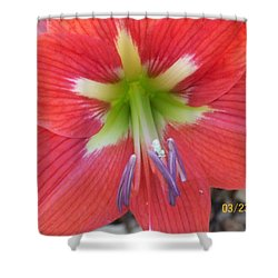 Amarylis Shower Curtain by Belinda Lee