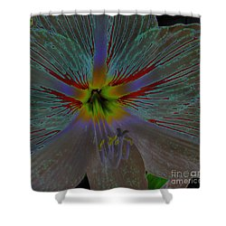 Amaryllis Colors Shower Curtain by D Hackett